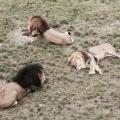 Haha, lees snel mee; welk van de 7 buurtdieren ben jij?!