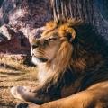 Trailer van levensechte Lion King gedeeld door Disney! Miljoenen keer bekeken. Bekijk het NU hier!